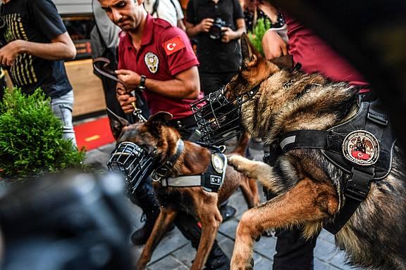 Polizeihunde beim Istanbul Pride 2018